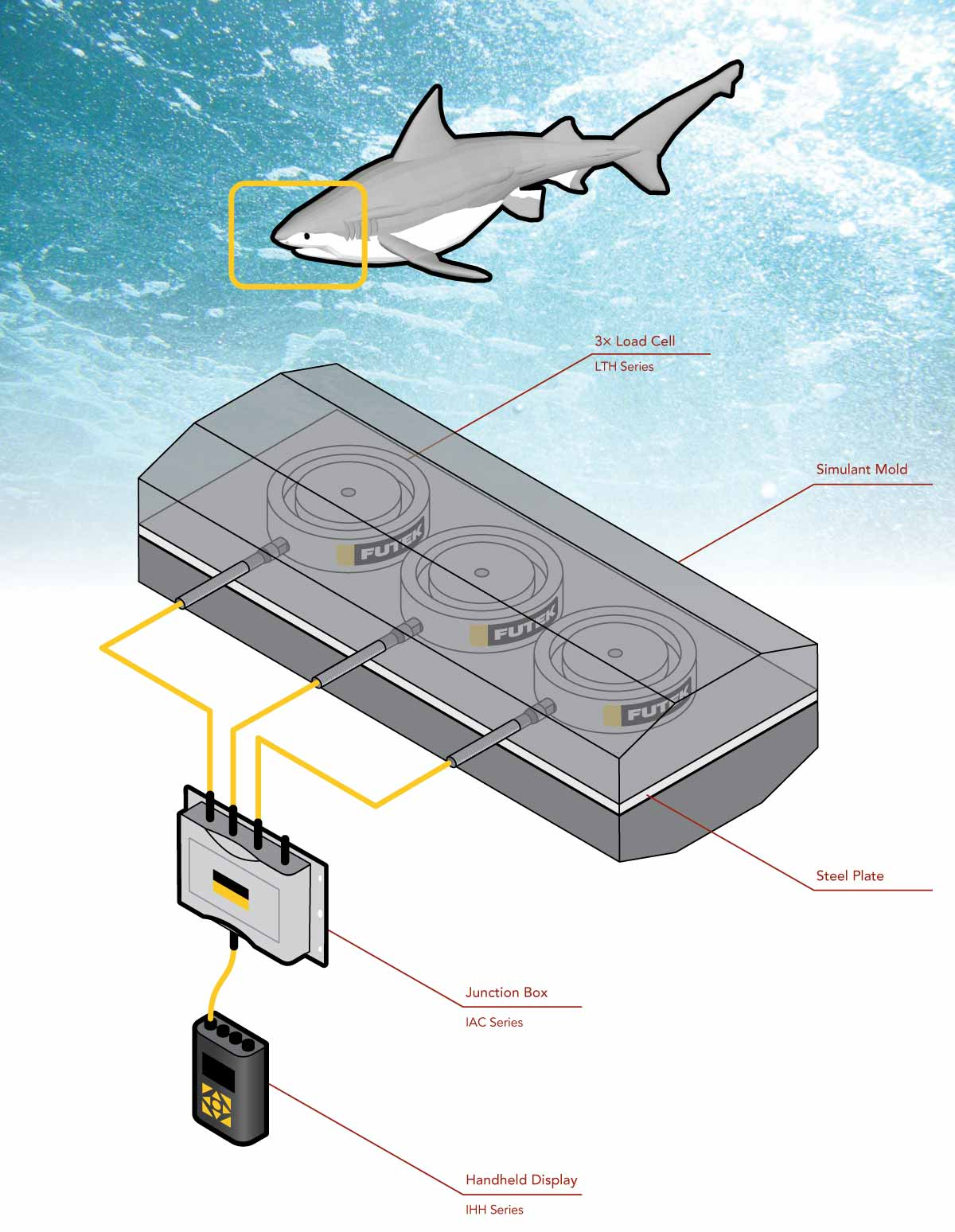 Shark Bite Force Measurement